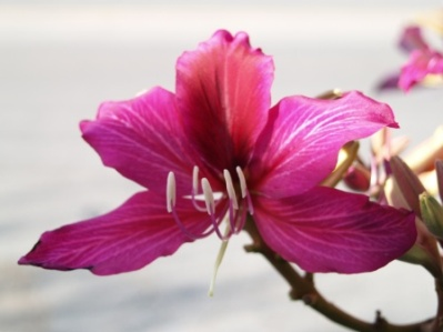 Hong Kong Orchid Monthly Plant Care