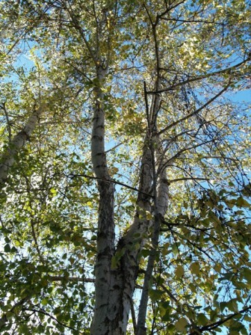Birch Monthly Plant Care