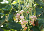 Arbutus 'Marina' Monthly Plant Care