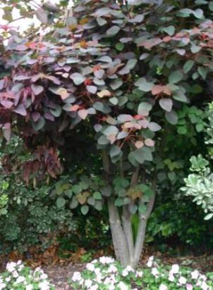 Plant Care Reminders for Trees in Zone 24